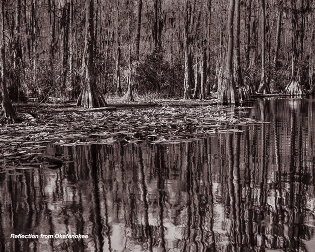 Reflection from Okefenokee