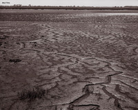 Mud Time (Oyster beds, Jekyll Island, GA)