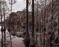Silent Passage (Parrish Pond, George L. Smith State Park, GA)
