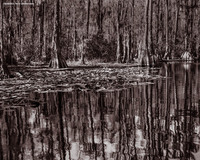 Reflection from Okefenokee (Okefenokee Swamp, GA)